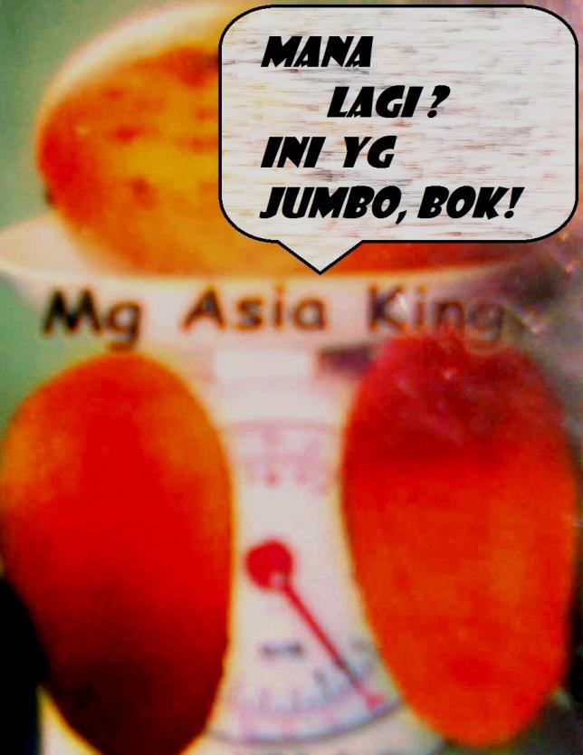 BIBIT MANGGA ASIA KING