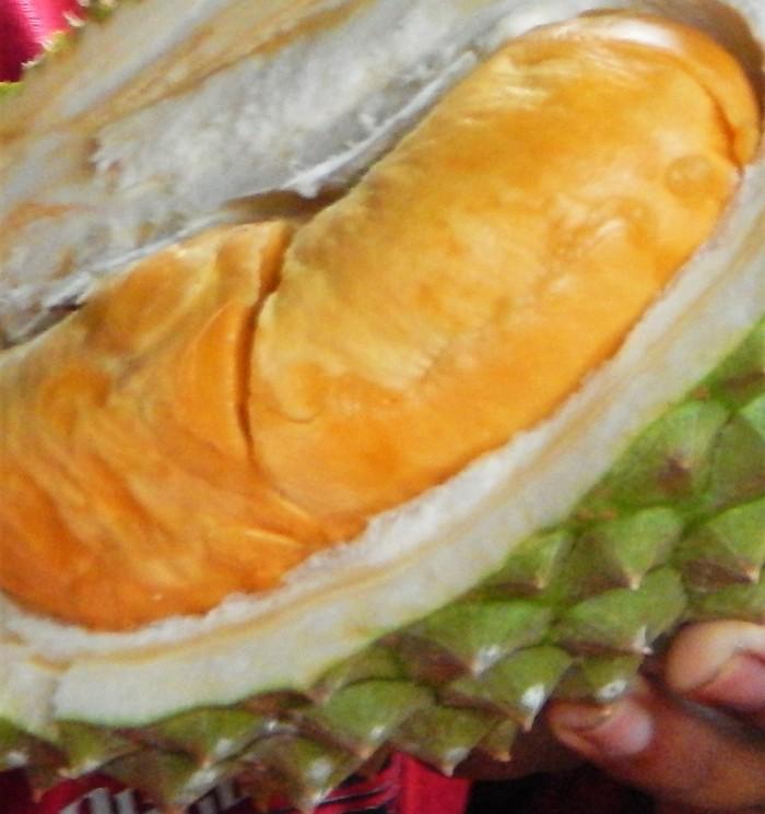 Bibit Durian Duri Hitam 5